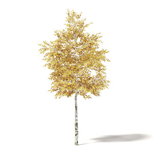 silver birch 4 2m model