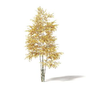 silver birch 3 6m 3D model
