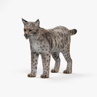 bobcat cat hd 3D model