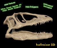 Animal Skull - PBR - Textured