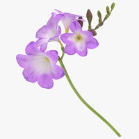 freesia purple - 3D model