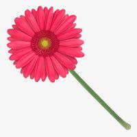 3D model gerbera pink -