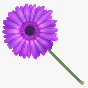 3D gerbera purple - model
