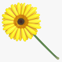 gerbera yellow - 3D