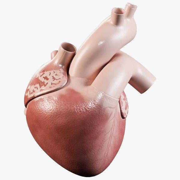 man heart organized 3D