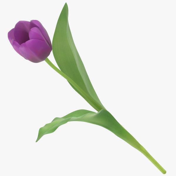 3D tulips purple -
