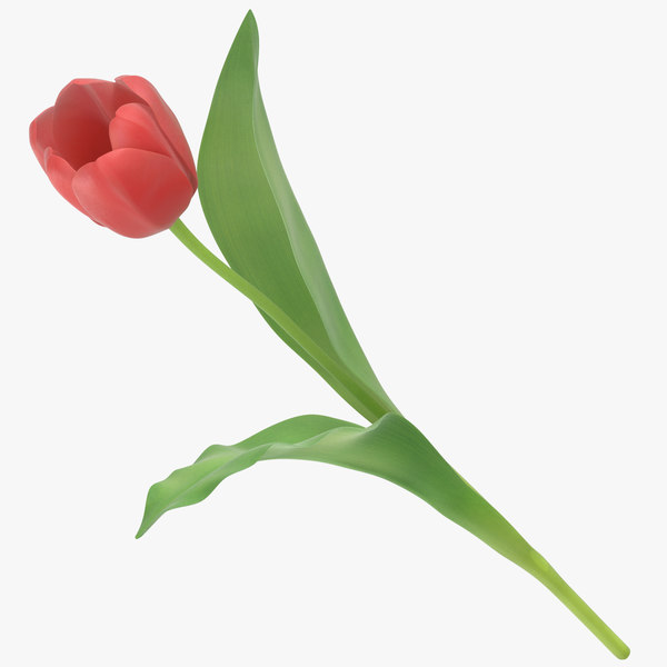 tulips red - 3D model