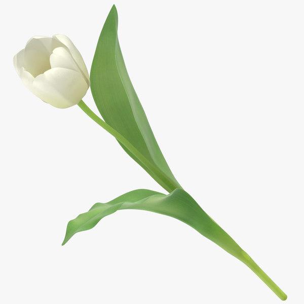 tulips white - 3D