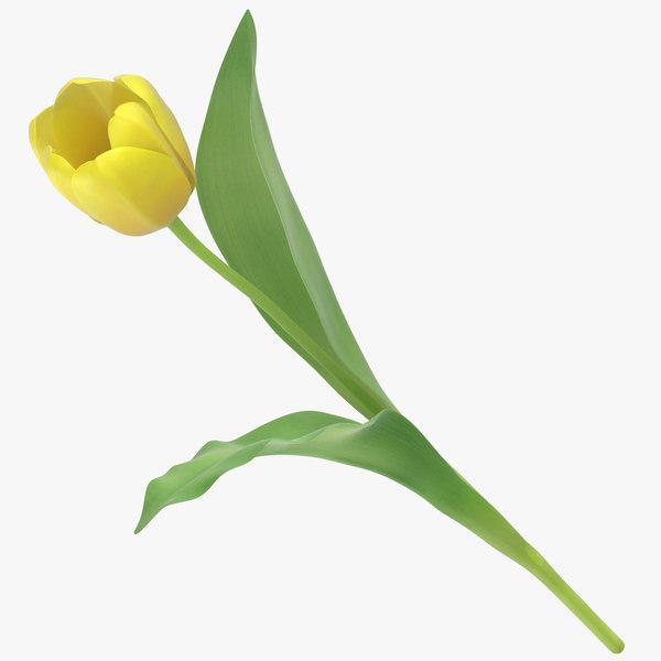 3D tulips yellow - model