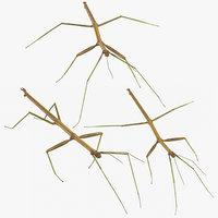 3D walkingstick poses walking model