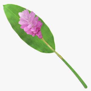 3D alpini purpurata pink -