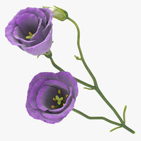 3D eustoma purple -