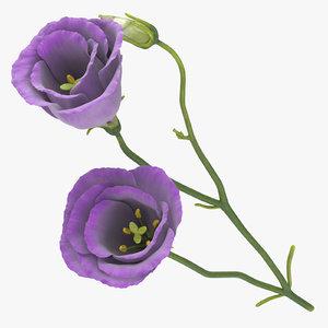 3D eustoma purple -