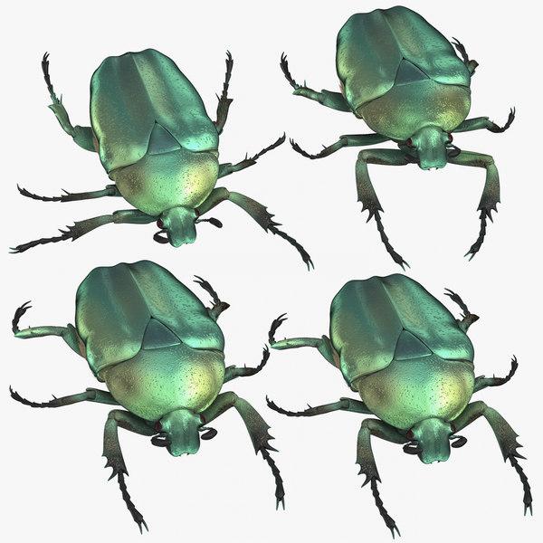 green scarab beetle 3D model