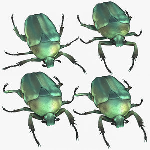 green scarab beetle 3D model
