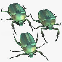 3D green scarab beetle poses
