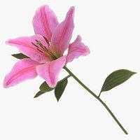 3D lilium pink -