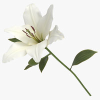 lilium white - 3D model