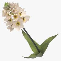 3D model ornithogalum white -