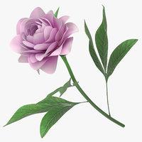 peony white pink - model