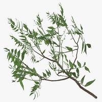 3D pistachio model
