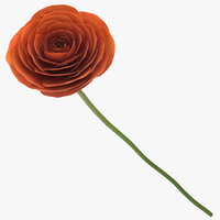 3D model ranunculus asiaticus orange -