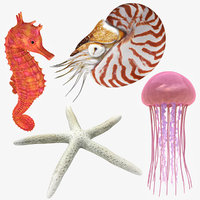 3D sea animals