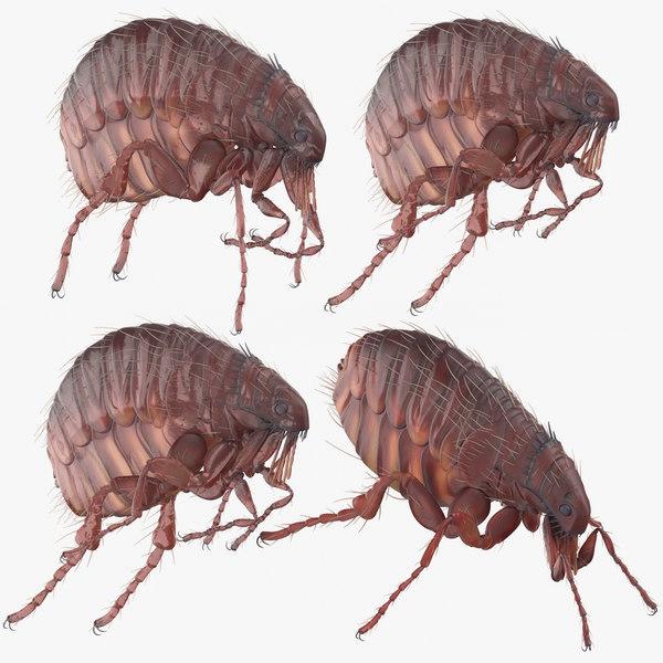 flea standing crawling 3D