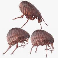 flea poses model