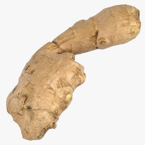 ginger root 02 3D model