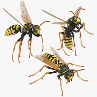3D model paper wasp poses