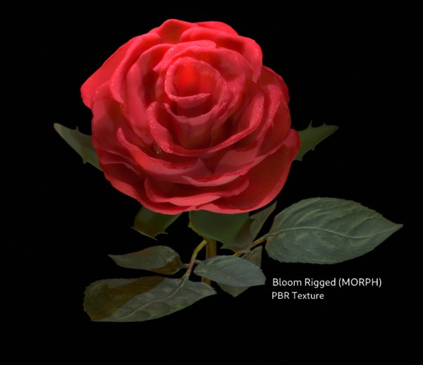 realistic rose flower blooming 3D model