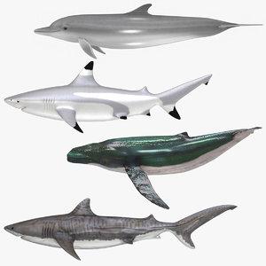 3D aquatic animals