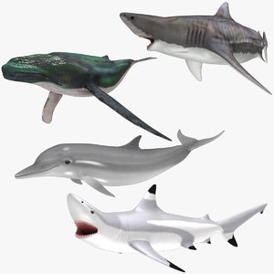 aquatic animals rigged 3D model