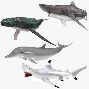 aquatic animals rigged 3D model