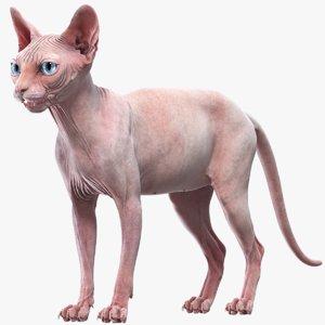 sphynx cat 3D model