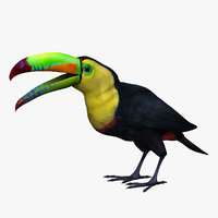 toucan color 3D model