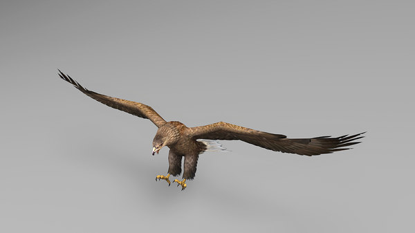 3D model eagle rigged animations