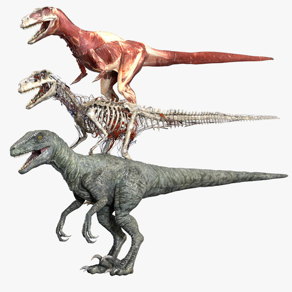 3D model v-ray rigged ceratosaurus