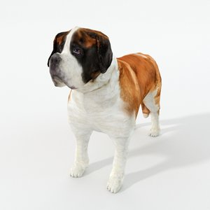 saint bernard 3D model