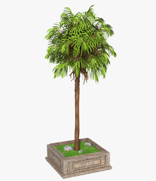 3D palm street tree model