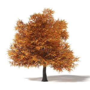 common oak 16 6m model
