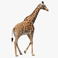 3D model giraffe walking pose fur