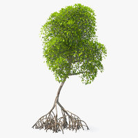 3D mangrove shrub