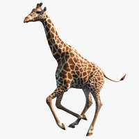 3D giraffe rigged model