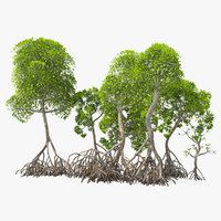 mangrove tree shrub 3D model