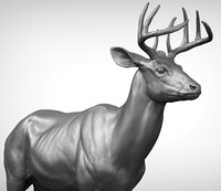 3D model white-tailed deer virginia