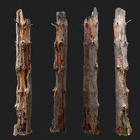 Dead tree 3d scan  -SNA0002