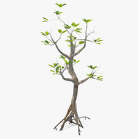 Mangrove Small Tree 3D Model