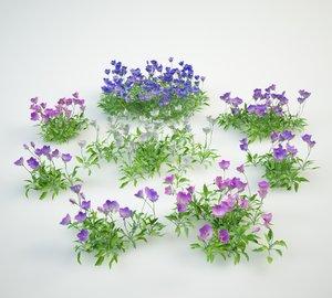 campanula carpatica 3D model